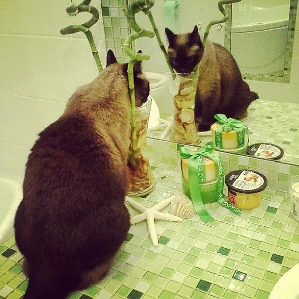 Киска в ванной комнате